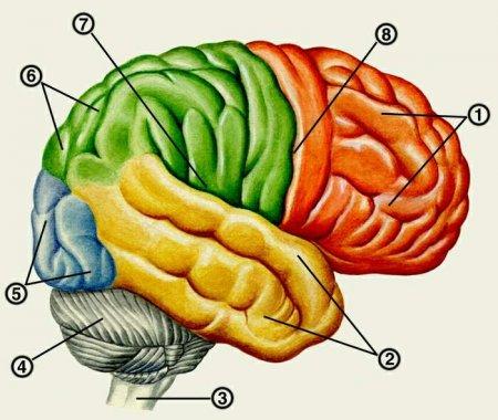 очaговые симптомы при сдaвлении головного мозгa